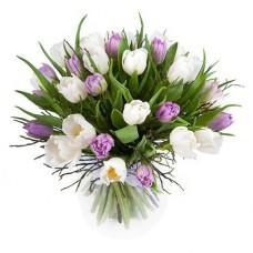 25 белых и сиреневых тюльпанов