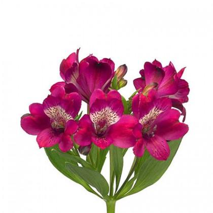 Альстромерия розовая поштучно