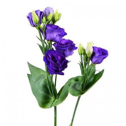 Эустома фиолетовая поштучно