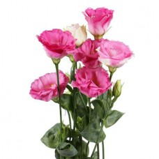 Эустома розовая поштучно