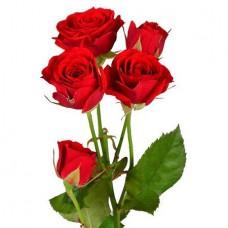 Кустовая роза красная поштучно