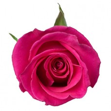 Роза розовая поштучно