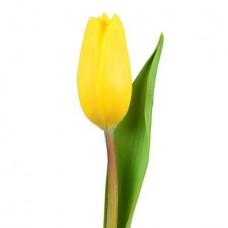 Тюльпан желтый поштучно