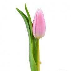 Тюльпан розовый поштучно